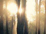 יער בריחה אירוע חברה